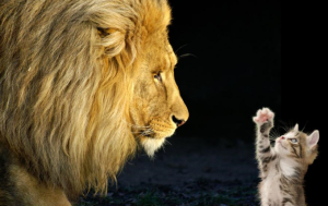 Kitten next to lion