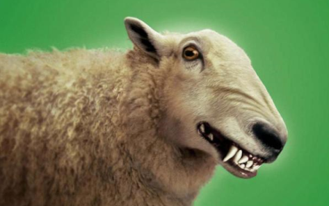 Sheep with sharp teeth