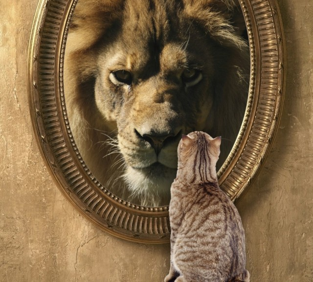 Cat seeing Lion in mirror